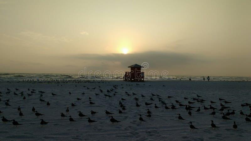 Смеясь над чайки на заходе солнца стоковые изображения
