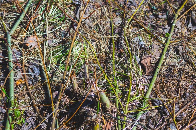Смолотый в почве леса леса с травой и хворостинами стоковые фотографии rf