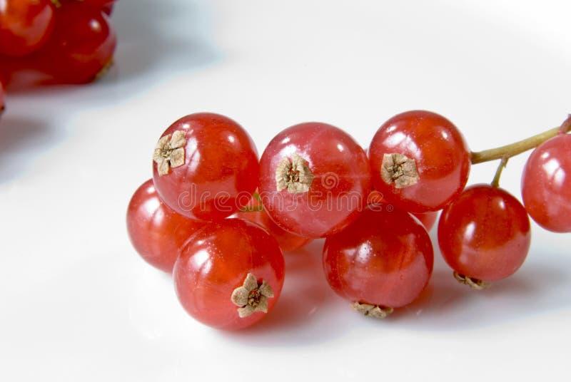 смородины красные стоковое изображение