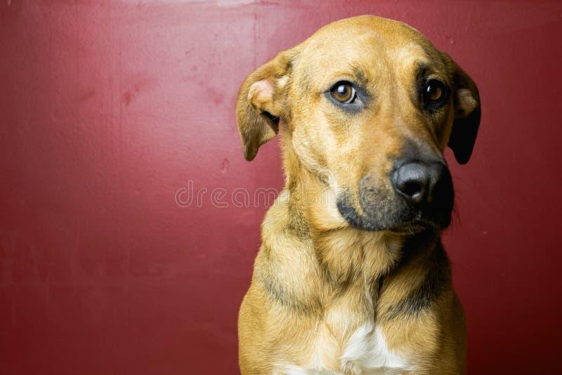 Смотреть Брайна и черной собаки сидя стоковое изображение