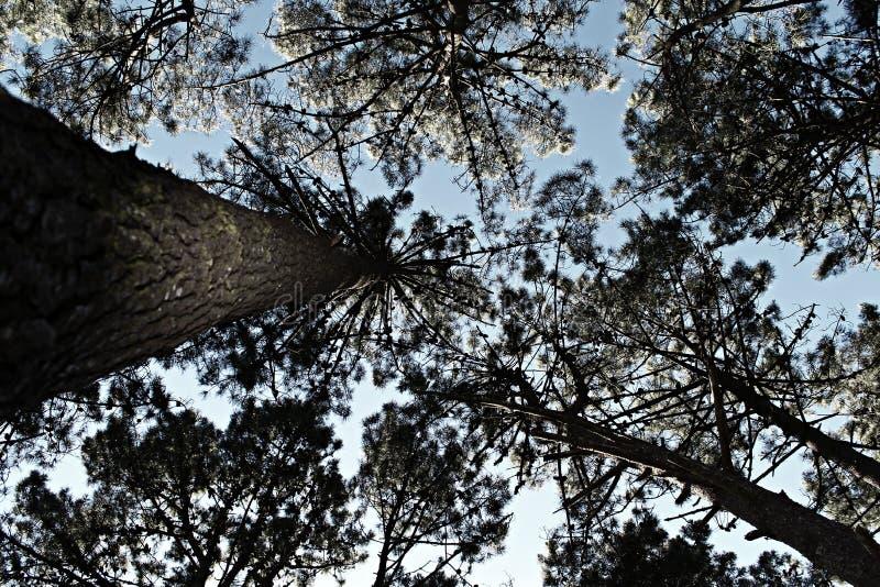 Смотреть вверх - лес стоковые фото