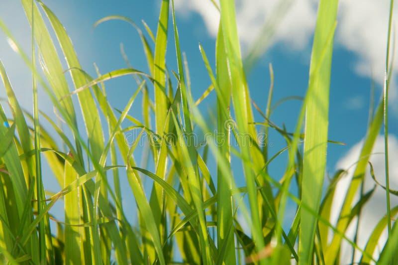 Смотреть вверх на небе от уровня травы стоковое изображение rf