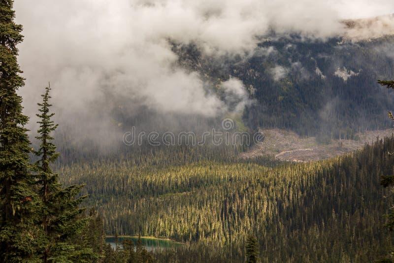 Смотреть в долину и облака нижнего яруса леса стоковые изображения