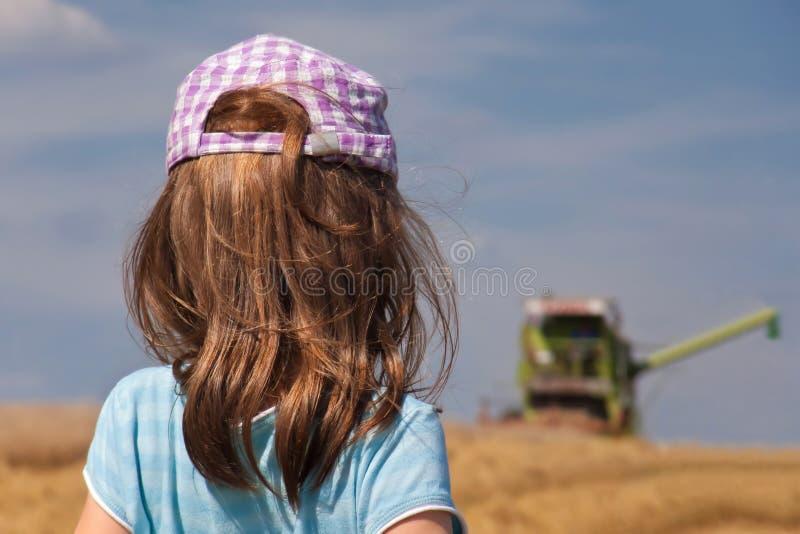 смотреть жатки девушки стоковые изображения rf