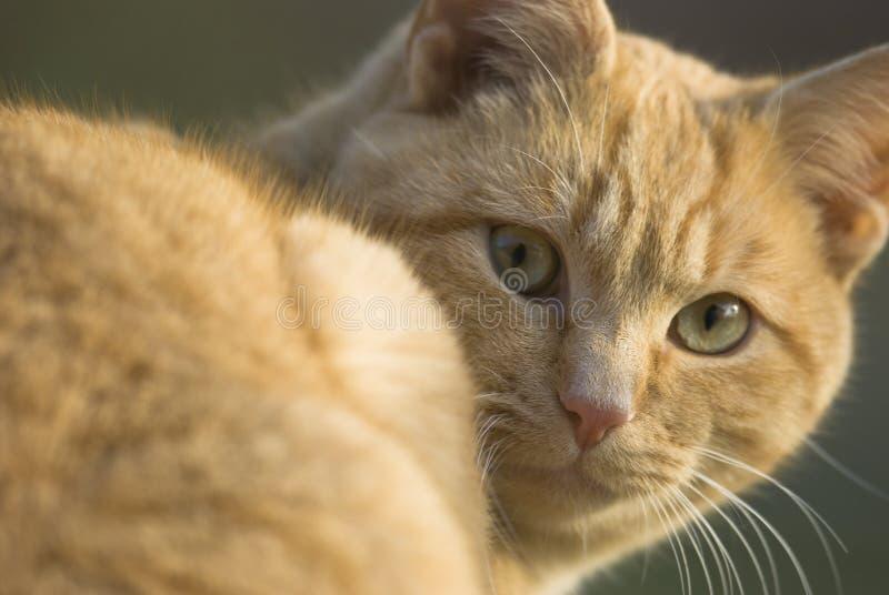 смотреть кота камеры стоковое изображение