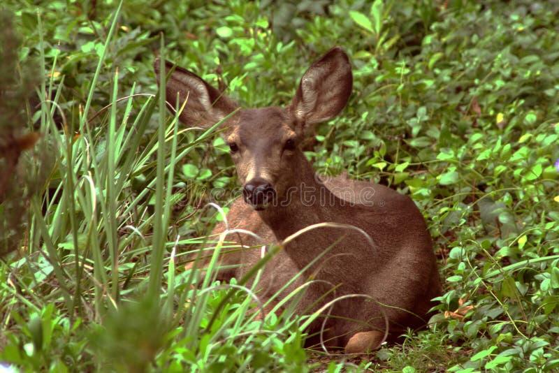 смотреть оленей камеры младенца стоковая фотография rf