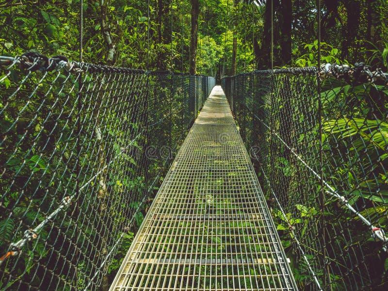 Смотрите на его страх на висячем мосте в тропическом лесе стоковая фотография