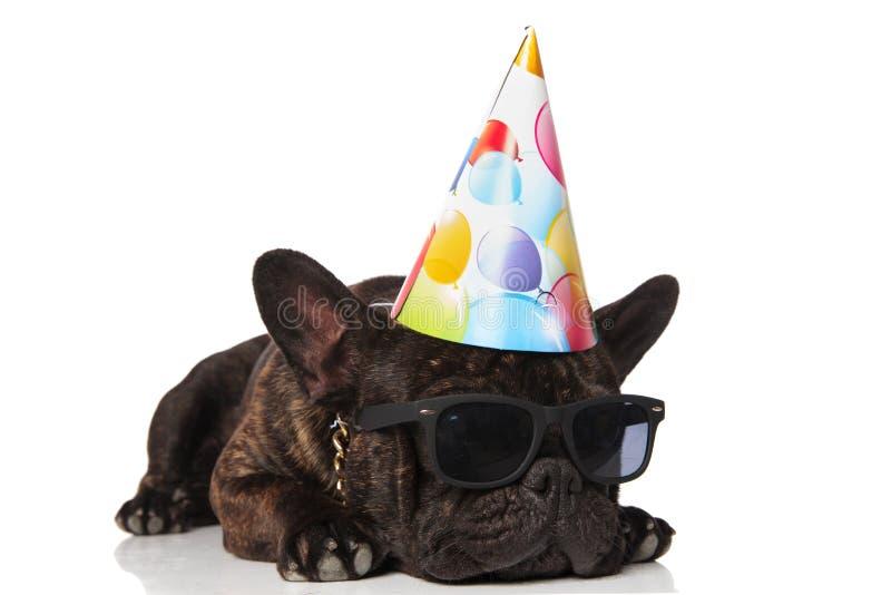 Смотрят, что встает на сторону бульдог милого дня рождения французский с солнечными очками стоковые фотографии rf