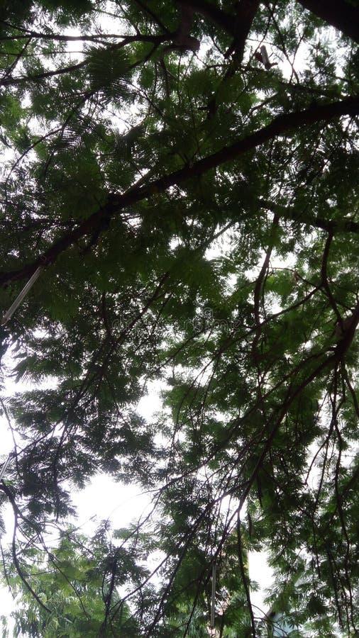 См. небо спрятанное в дереве стоковое изображение rf