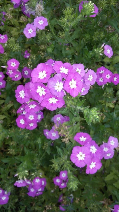 см. этот gorgious цветок стоковые фото