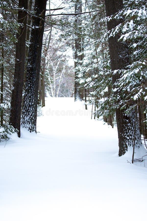 Снегокрытая дорожка в вертикальном лесе стоковое изображение rf