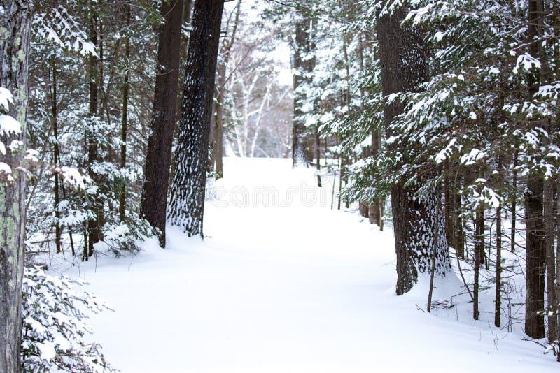 Снегокрытая дорожка в горизонтальном лесе стоковые изображения rf