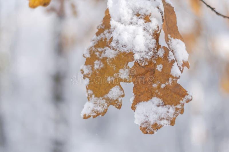 Снег Брайна froesty предусматривал лист с предпосылкой леса расплывчатой стоковое фото