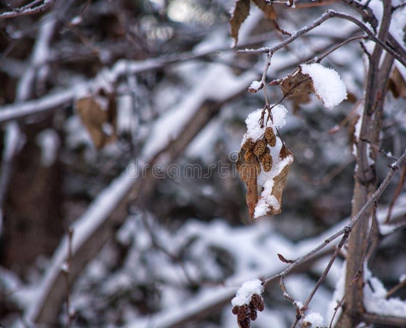 снег в Аляске стоковые изображения