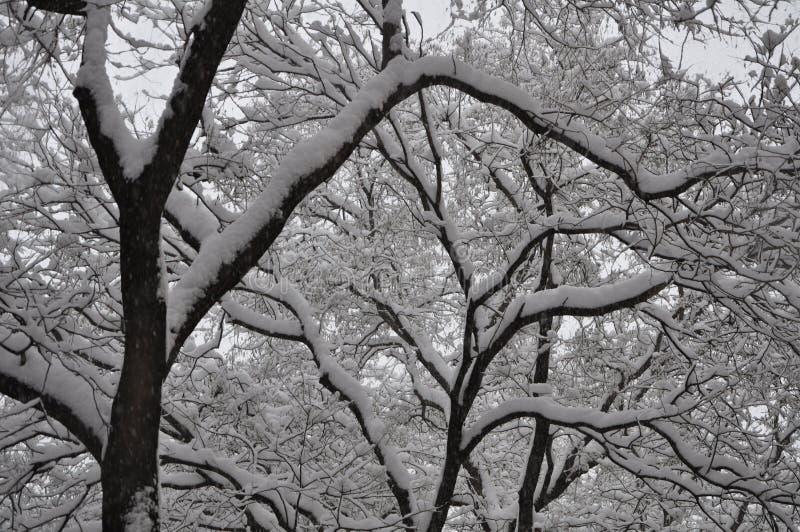Снег деревьев в улице стоковое изображение