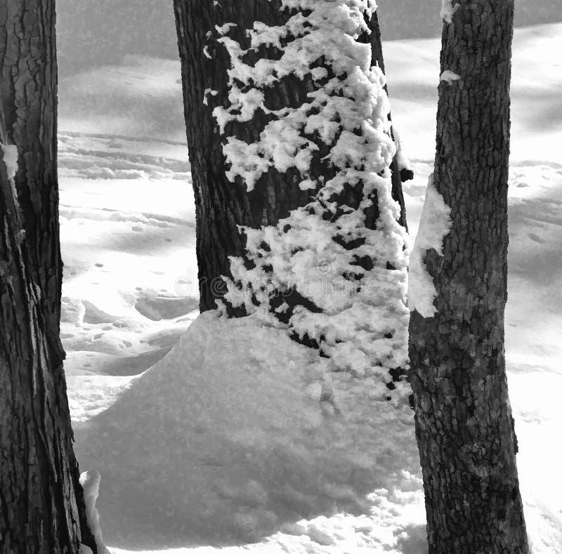 Снег дунутый на стволы дерева стоковая фотография