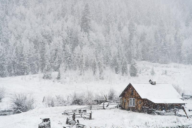 Снег зимы падая на бревенчатую хижину в национальном лесе san Изабеллы стоковые изображения rf