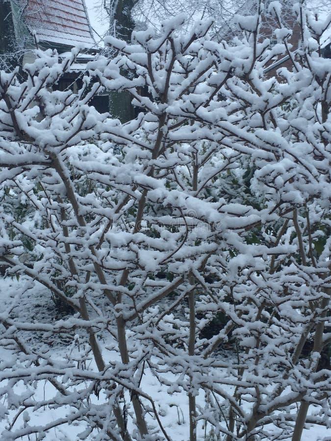 Снег зимы стоковые фото