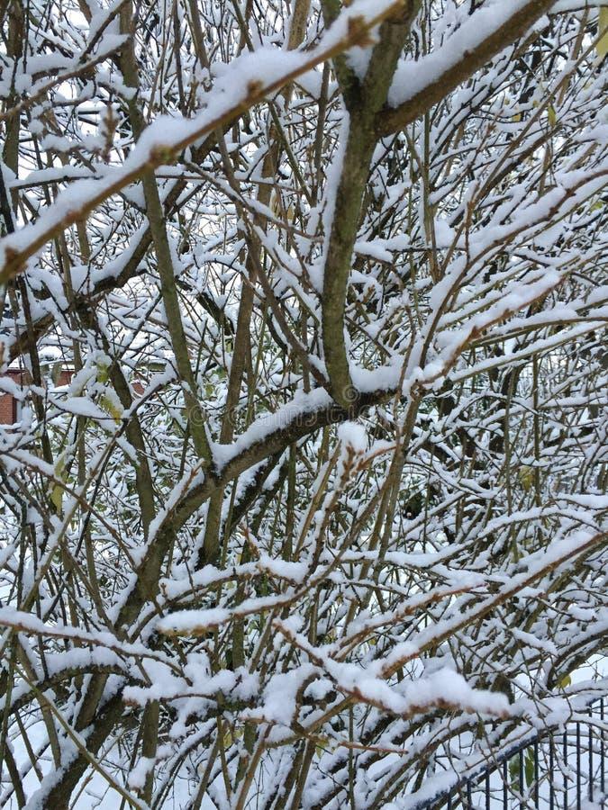 Снег зимы стоковое фото rf