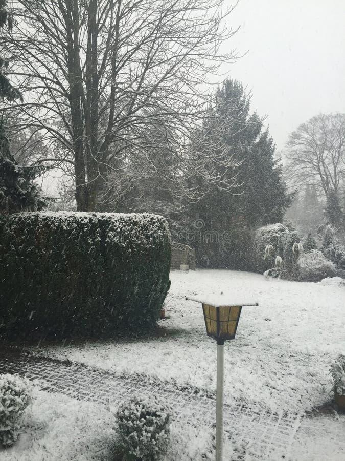 Снег зимы стоковое изображение rf