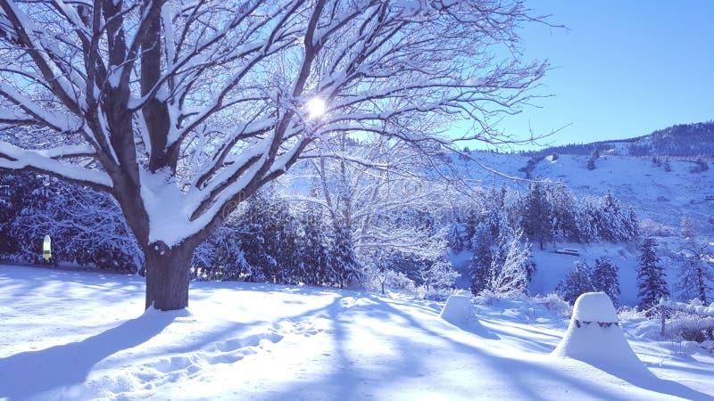 Снег зимы стоковое фото