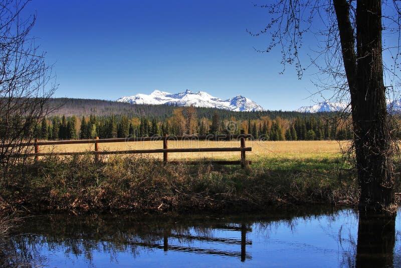 Снег национального парка ледника покрыл пики возвышается за спокойным потоком бежать за полем стоковое изображение