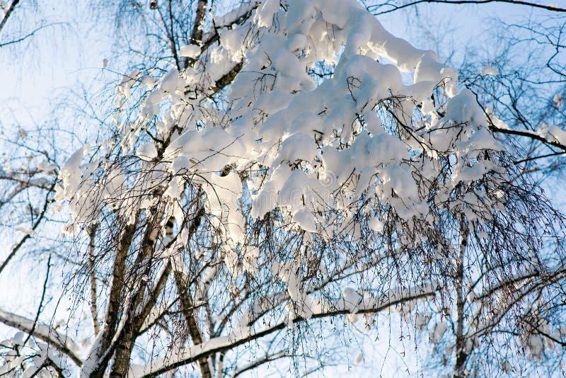 Снег на ветвях березы стоковые изображения rf