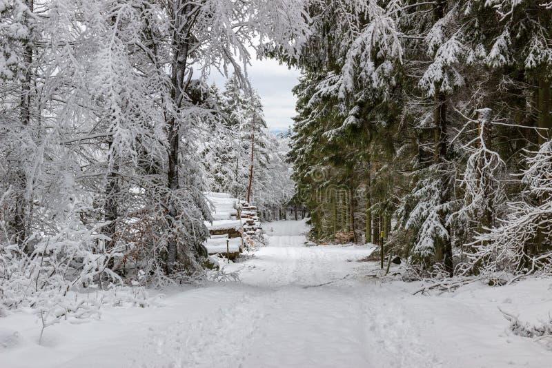 Снег покрыл деревья и дорогу стоковые фотографии rf