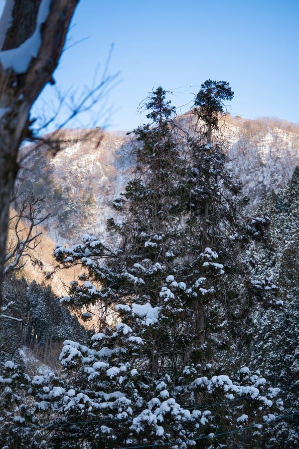 Снег покрытый на дереве в лесе стоковые изображения rf