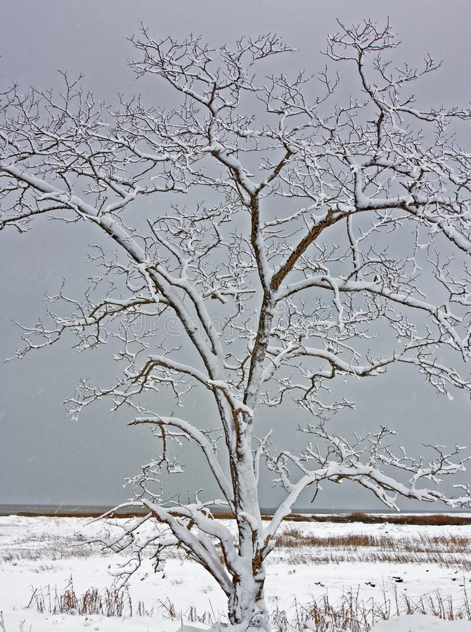 Снег покрыл пляж болота дерева стоковая фотография