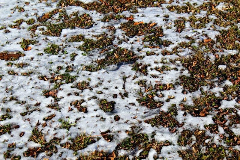 Снег плавя на том основании стоковое фото