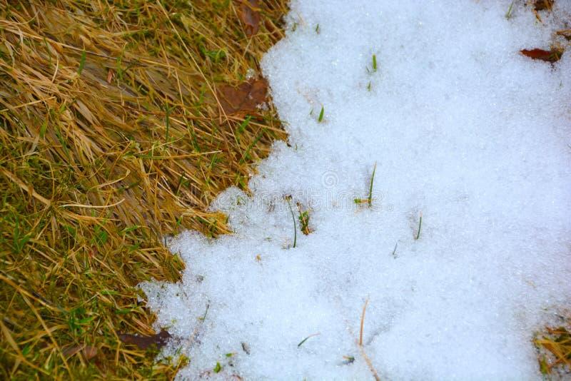 Снег плавя на траве стоковая фотография rf