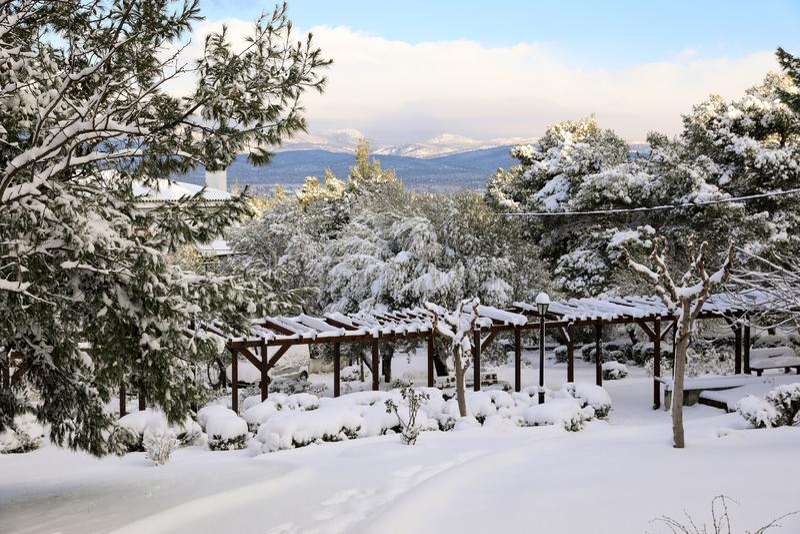 Снег утра зимы красивый покрыл деревья в парке города Афина, Греции, восьмого из января 2019 стоковое фото