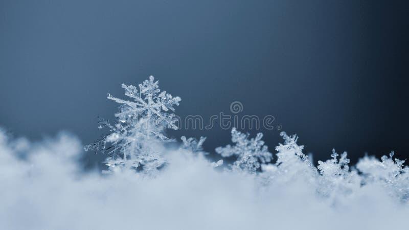 Снежинка Фото макроса реального кристалла снега Природа красивой предпосылки зимы сезонная и погода в зиме стоковая фотография rf