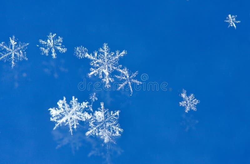 снежинки сини предпосылки стоковые изображения