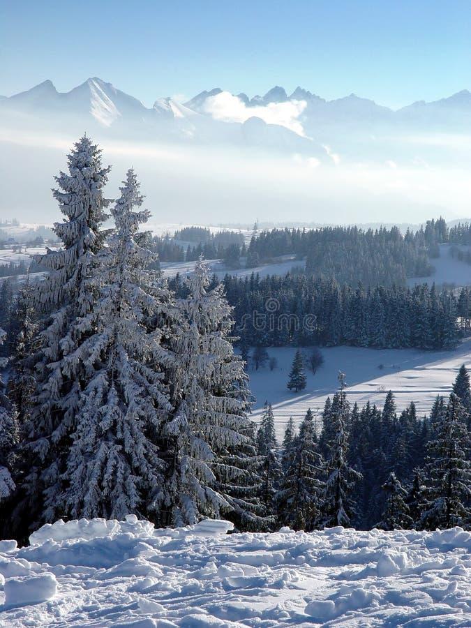 Снежное и морозное утро в лесе зимы в mountai стоковая фотография rf