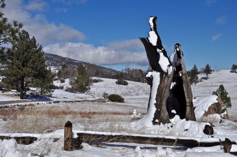 Снежности на парке штата Cuyamaca стоковое изображение
