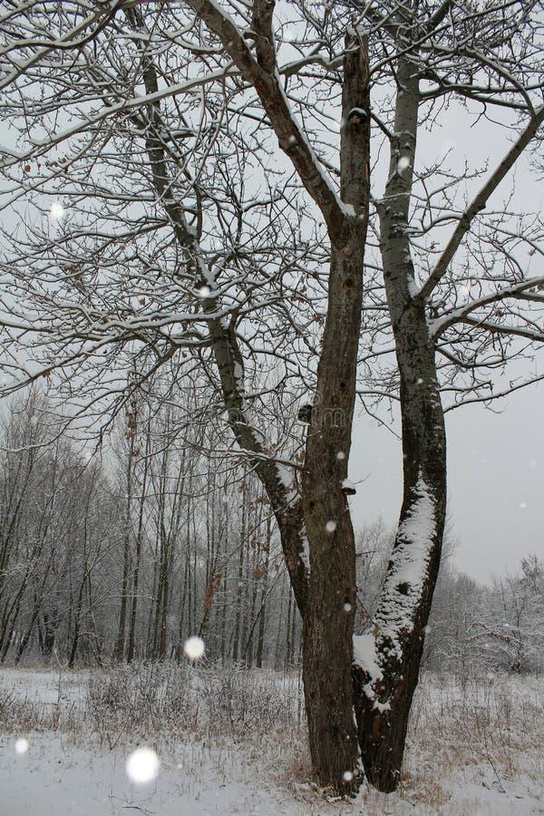 Снежности покрывают землю стоковые фотографии rf