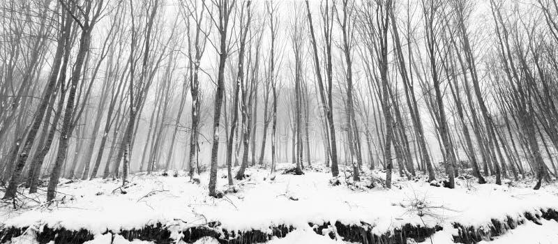 снежные валы стоковое фото rf