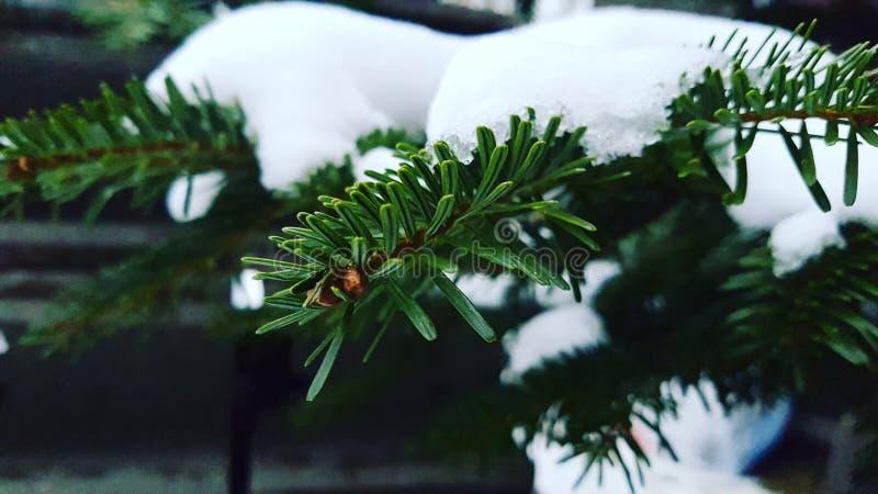 снежный вал стоковое фото