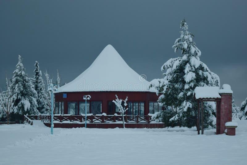 снежный день стоковое фото