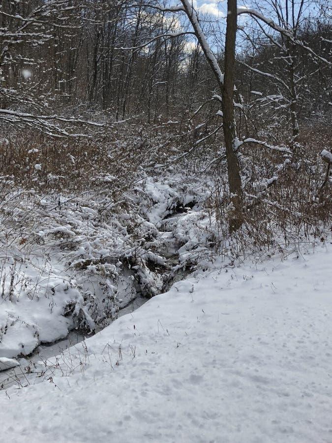 Снежный холодный красивый день стоковое изображение rf