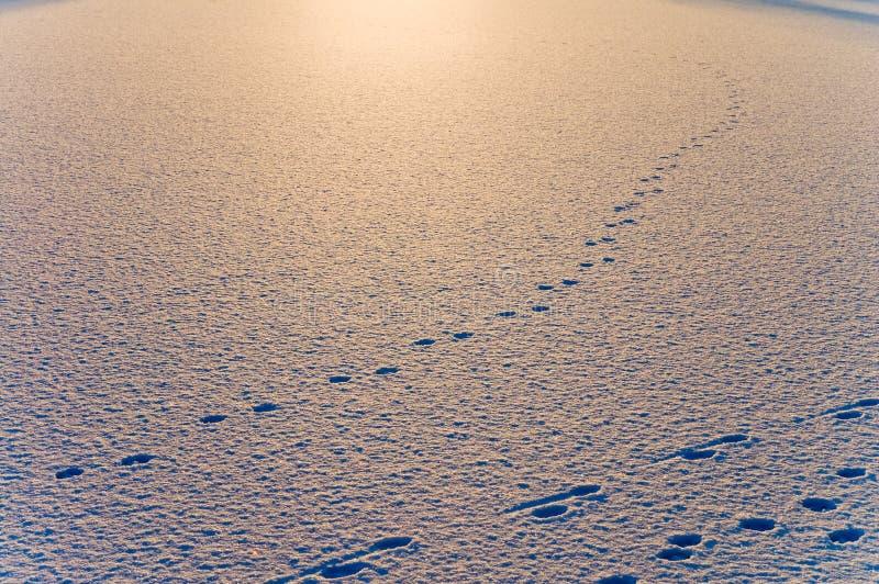 снежок вечера стоковые изображения