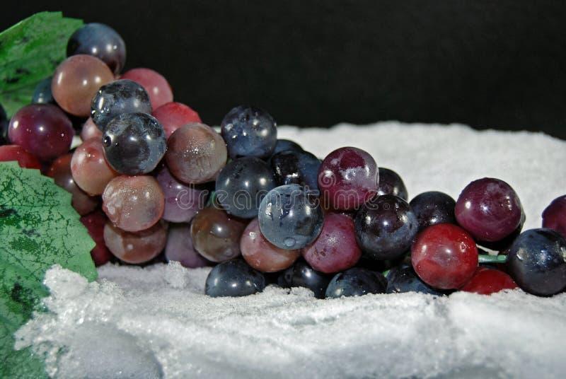 снежок виноградин стоковые изображения