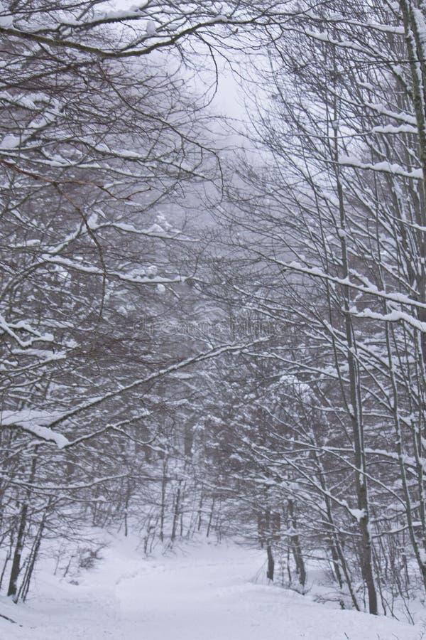 Снежок в пуще стоковые фотографии rf
