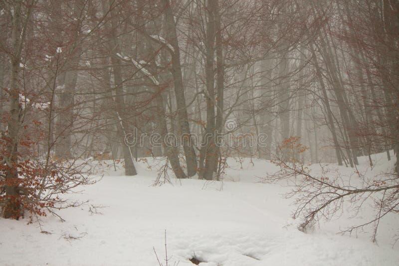 Снежок в пуще стоковое фото