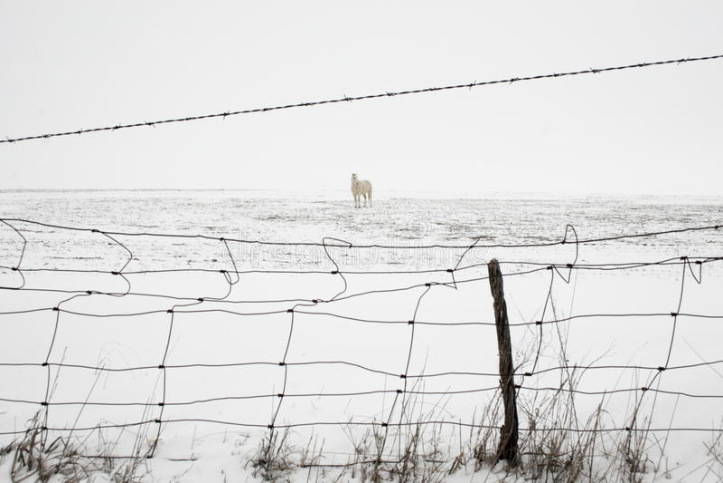 снежок лошади стоковые изображения