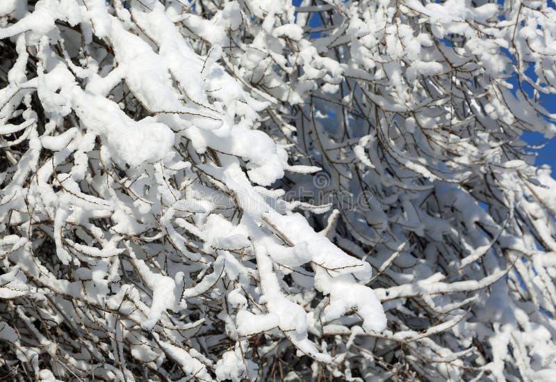 Снежок на ветвях стоковые фото