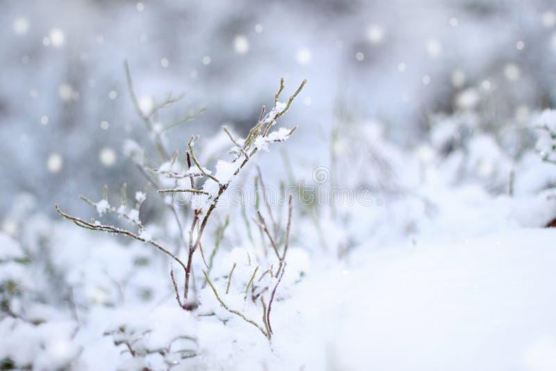 снежок первого впечатления стоковые изображения