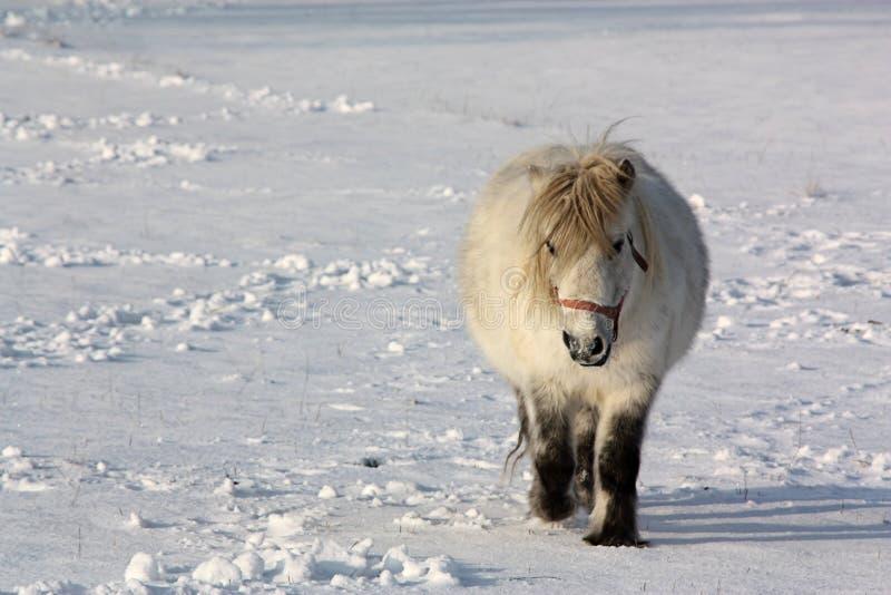 Download снежок пониа стоковое изображение. изображение насчитывающей холодно - 17600723